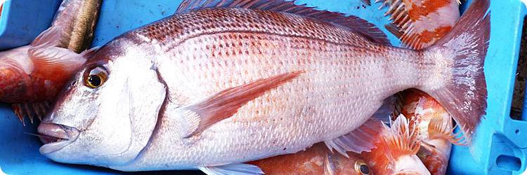 Adrasan'da mercan balığı avı turu